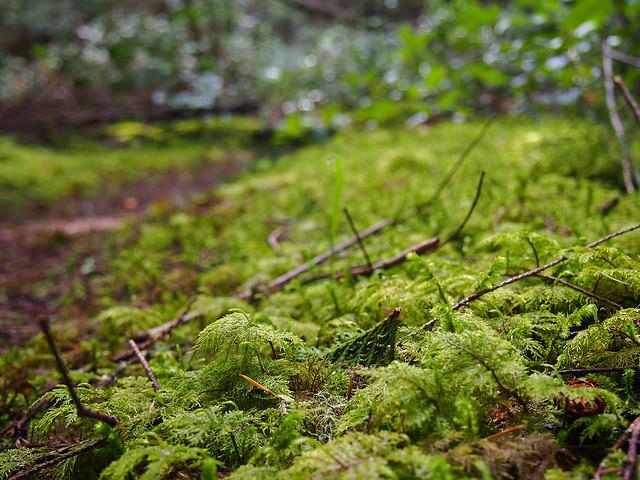 Moss Guy
